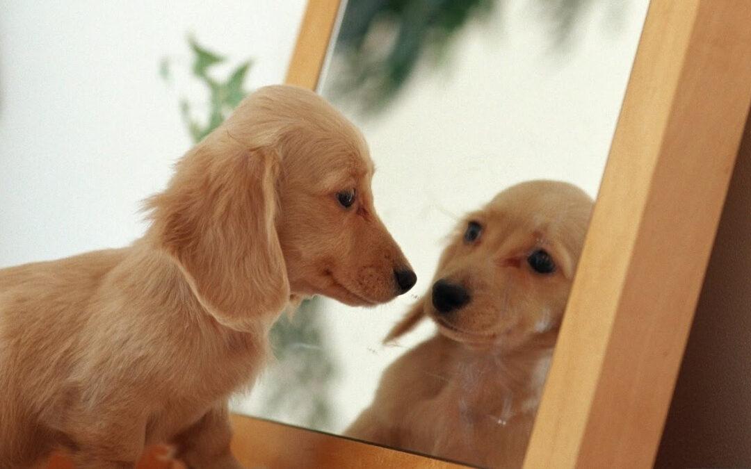 """Povestea cu talc pentru copii """"Casa cu o mie de oglinzi"""""""